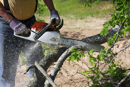 Top tree service expert tips