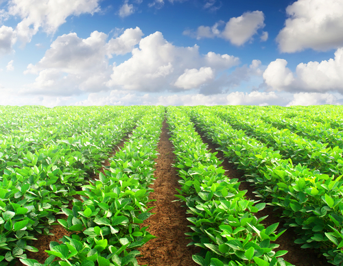 Farming and Agriculture in South Africa