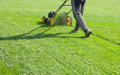 Top lawn supply and maintenance specialist tips