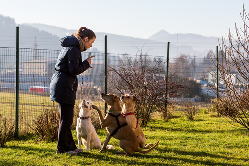 Top dog trainer tips