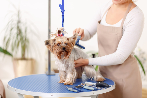 Top pet groomer tips