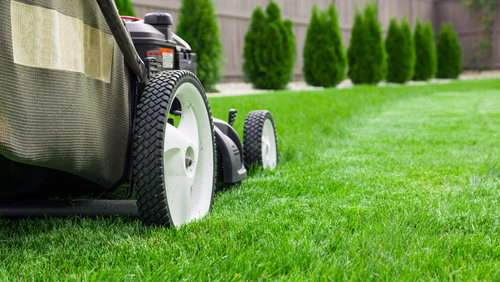 Why Is There A Need For Lawn Supply And Maintenance Specialists?