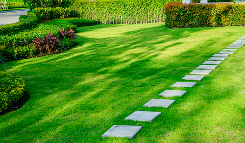 Why Do I Battle So Much In Keeping My Lawn In Good Condition?